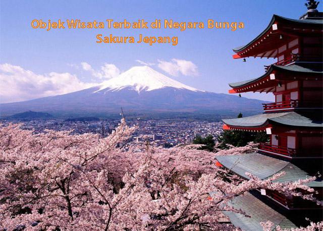 Negara Bunga Sakura Jepang
